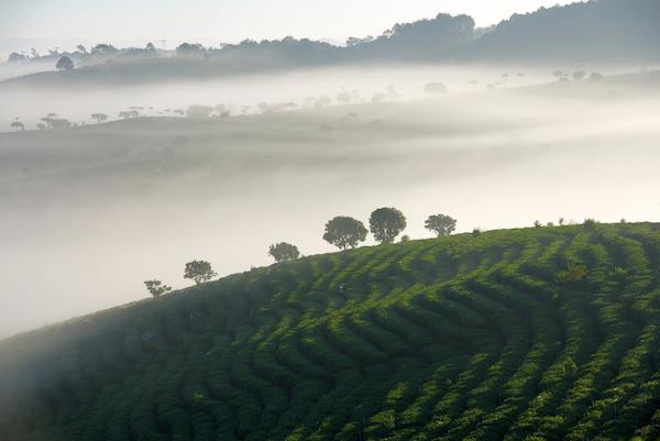 Beyond the Tea Leaves