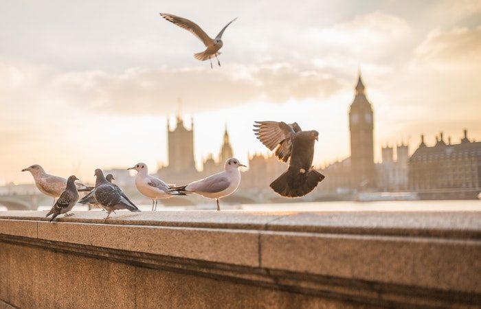 Stop Feeding the Pigeons