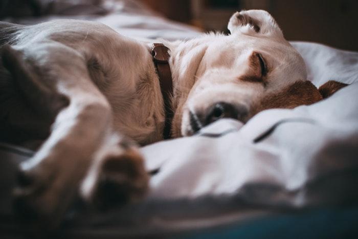 beauty of sleep